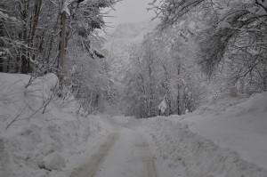 Дорога в Цей - январь 2015 год